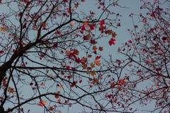 Листья осени, небо стоковое изображение