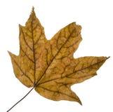 листья осени ненастные Стоковые Фотографии RF