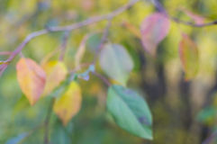 Листья осени (нерезкость) Стоковые Изображения RF