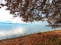 Листья осени около озера Стоковые Изображения