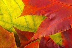 Листья осени очень близкие Стоковые Изображения