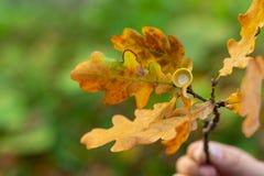 Листья осени, очень отмелый фокус стоковая фотография rf