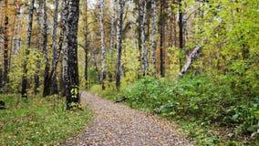 Листья осени падая в парк от ветвей лиственного дерева, красивый пейзаж сезона падения Стоковое Изображение RF