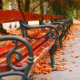 Листья осени - падая листья Стоковая Фотография RF