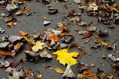 Листья осени - падая листья Стоковое фото RF
