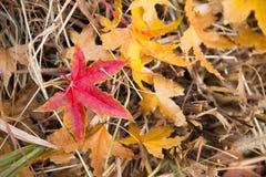 Листья осени парка стоковое изображение rf