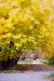 листья осени паркуют желтый цвет Стоковые Фотографии RF