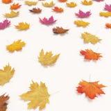 Листья осени падая изолированные на белой предпосылке Стоковые Фото