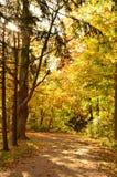 Листья осени покрывая путь в древесины стоковое фото
