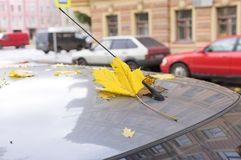 Листья осени покрыли автомобиль Стоковое Изображение RF