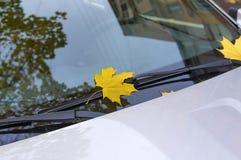 Листья осени покрыли автомобиль Стоковые Фото