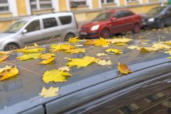 Листья осени покрыли автомобиль Стоковое Изображение
