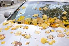 Листья осени покрыли автомобиль Стоковое Фото