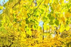 Листья осени подсвеченные Стоковое фото RF