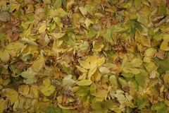Листья осени предпосылки стоковые фотографии rf