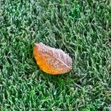 Листья осени предусматриванные с заморозком. стоковые изображения rf