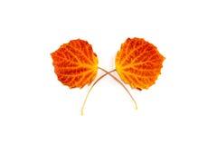 Листья осени против белой предпосылки Стоковые Изображения