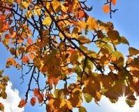 Листья осени против голубого неба Стоковое фото RF