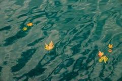 Листья осени плавая над морем Стоковая Фотография RF