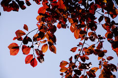 Листья осени рядом с падением Справочная информация Стоковое Изображение