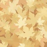 Листья осени, сезон падения Стоковые Фото