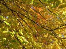 Листья осени середины ноября стоковые изображения