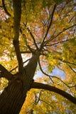 листья осени смотря вверх Стоковые Изображения