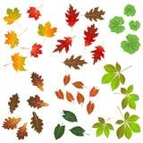 Листья осени, собрание для конструкторов иллюстрация штока