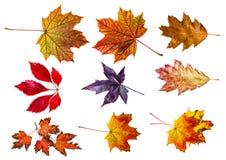 Листья осени - собрание Стоковое Изображение