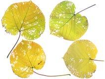 Листья осени собрания красивейшие цветастые Стоковое Изображение RF