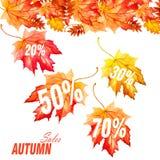 Листья осени собрания красивые красочные на белой предпосылке Стоковая Фотография RF