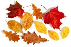 Листья осени собрания Стоковые Изображения RF