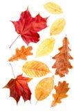 Листья осени собрания Стоковое Изображение RF