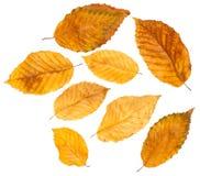Листья осени собрания Стоковое Фото