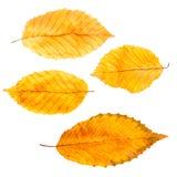Листья осени собрания Стоковые Фотографии RF