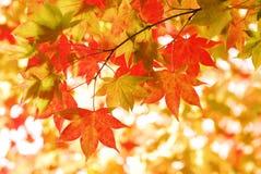 листья осени солнечные стоковая фотография rf