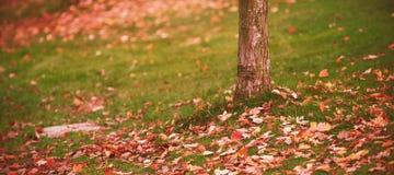 Листья осени стволом дерева на поле Стоковое Изображение