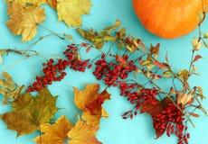 Листья осени сухие на голубой предпосылке Стоковая Фотография