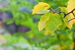 Листья осени сухие Стоковое Фото