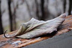 листья осени сухие Стоковые Фотографии RF