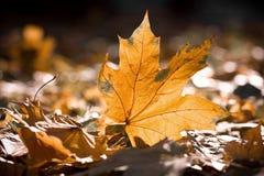 листья осени сухие Стоковое Изображение RF