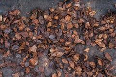 Листья осени с деревом на траве в грязи друзья падения осени листают под древесиной погоды прогулки Много коричневые старые листь Стоковое Фото