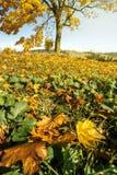 Листья осени с деревом стоковое фото