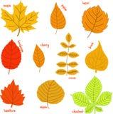 Листья осени с их именами Стоковая Фотография