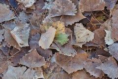 Листья осени с касанием цвета стоковые изображения rf