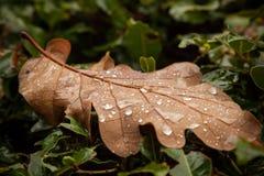 Листья осени с raindrops стоковая фотография rf