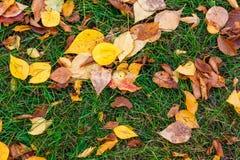 Листья осени текстуры стоковая фотография