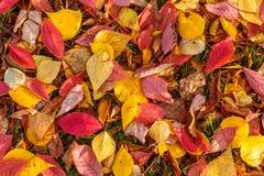 Листья осени текстуры стоковые фото