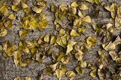 листья осени упаденные предпосылкой Стоковое Изображение RF