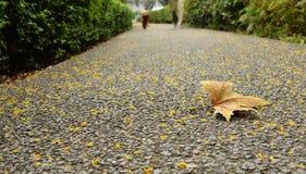 Листья осени упаденные ландшафтом Стоковая Фотография